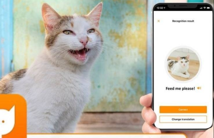 Download MeowTalk Beta App