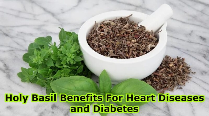 Holy Basil Benefits For Heart Diseases and Diabetes