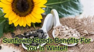 Sunflower Seeds Benefits For You In Winter!