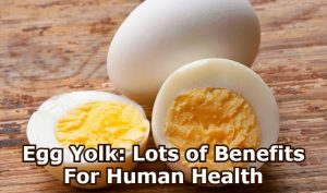 Egg Yolk: Lots of Benefits For Human Health