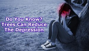 Do You Know? Trees Can Reduce The Depression